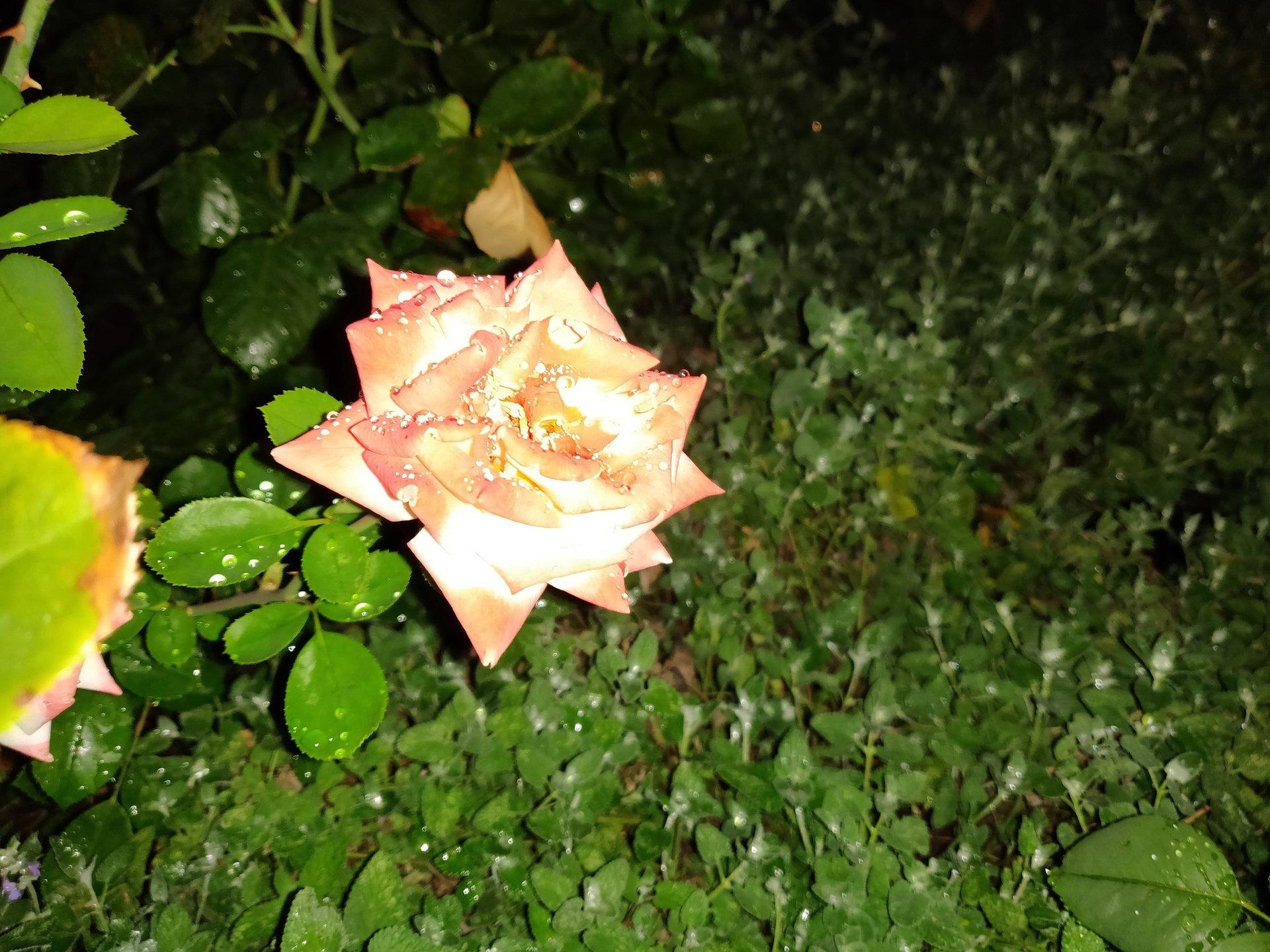 Květina - s bleskem