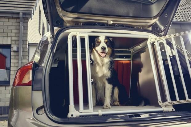 Nedbalí lidé vozí v autě psy volně. Ford proto chlupáčům přizpůsobil Focus kombi