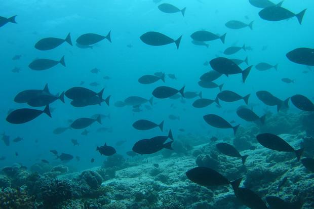 Vědci odhalili další rybu, která se dožije i sta let