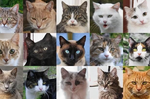 Internet se plní obrázky koček, které neexistují