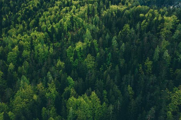Výsadba nových stromů v Evropě by mohla zvýšit množství srážek