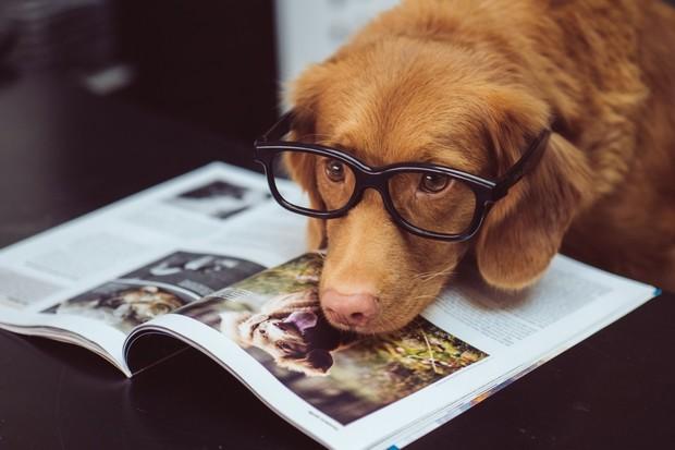 Podle vědců dokáží někteří psi rozpoznat lež