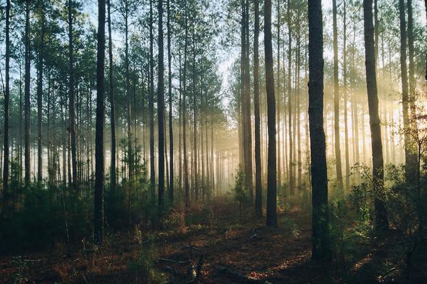 Jak být v každodenním životě šetrnější k životnímu prostředí?