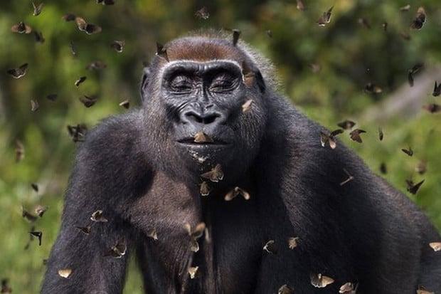 Ekologická organizace The Nature Conservancy vyhlásila vítěze fotografické soutěže