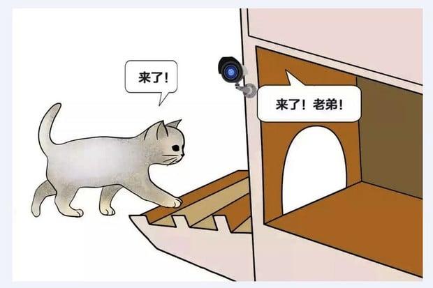 Robotizovaný útulek pro kočky? V Číně realita