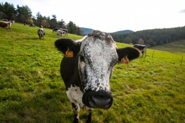 Carrefour použije blockchain, aby sledoval původ potravin