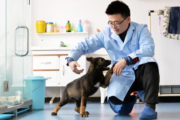V Číně naklonovali policejního psa. Chtějí tak zkrátit trénink