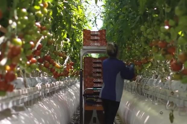 Farmaření budoucnosti? V poušti a s mořskou vodou