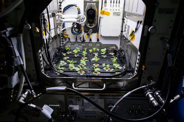 Podívejte se, jak na Mezinárodní vesmírné stanici pěstují ředkvičky
