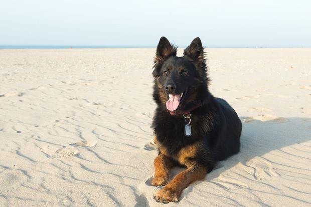 Vědci vyvinuli systém umělé inteligence, který odměňuje psy za dobré chování
