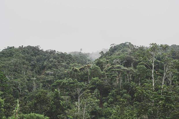 Loni se zvýšil rozsah ničení deštných pralesů