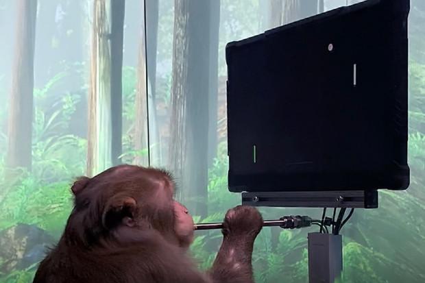 Opice s čipem Neuralink hraje ping-pong pomocí své mysli
