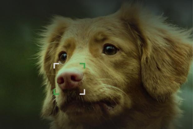 Aplikace NOSEiD umí najít ztracené psy