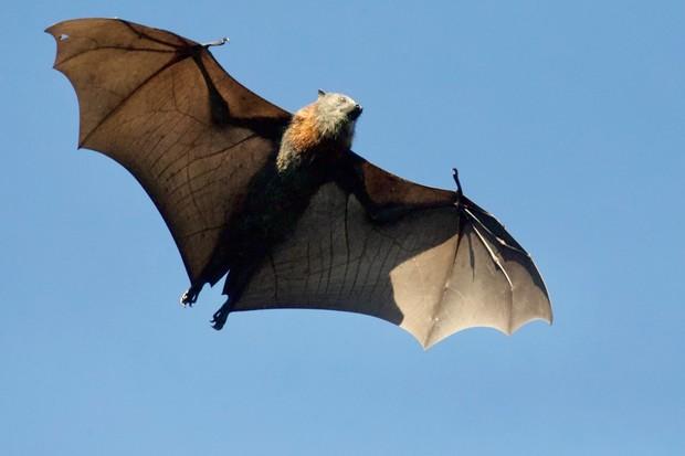 Jak hlídat místnost bez kamer? Vědce inspirovali netopýři